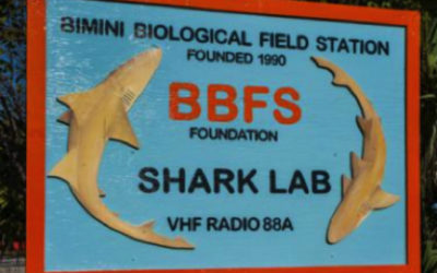 Alf Thompson Memorial Scholarship interns experience shark research at Bimini Shark Lab, August 2014.