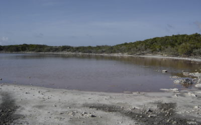 Anaconda salt pond becomes anoxic, spring 2015!